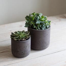 Cocoa Cement Plant Pot  - save 30%