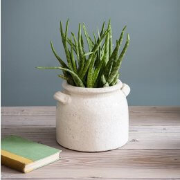 Ravello Crackle Glaze Pot - save 20%