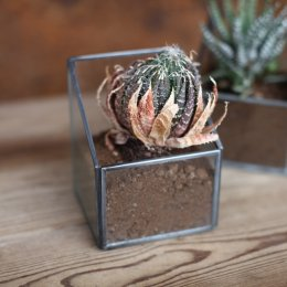 Zinc Planter - Small SAVE 30%