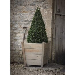 Tapered Spruce Planter - Large