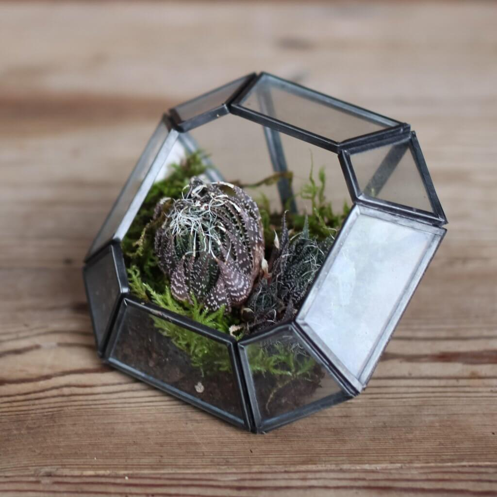 Glass and Zinc Terrarium