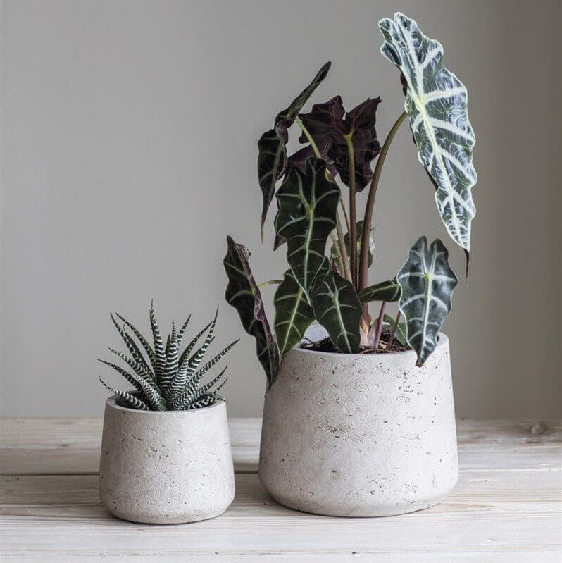 Stone Tapered Cement Plant Pots - Set of 2