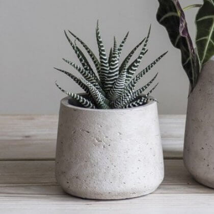 Stone Tapered Cement Plant Pot - Small (save 20%)
